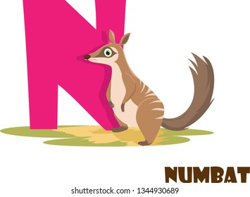 Cute Animal Zoo Alphabet. Letter N for Numbat