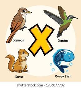 Cute Animals Alphabet Letter X for X Ray Fish Tetra Xenops Xantus Xerus