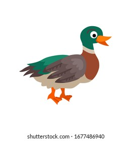 Cute animals - duck. Illustrations for children. Baby Shower card. Cartoon domestic character isolated on white background. Farm wildlife