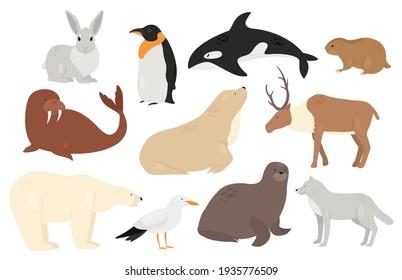 Cute Arctic Antarctica animals and birds set, white polar bear wolf penguin orca seal