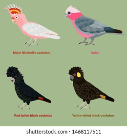 Cute Australia Cockatoo, parrot bird vector illustration set, Galah, Major Mitchell, Pink cockatoo, Red-tailed, black, yellow, tailed, black cockatoo, Colorful bird cartoon collection