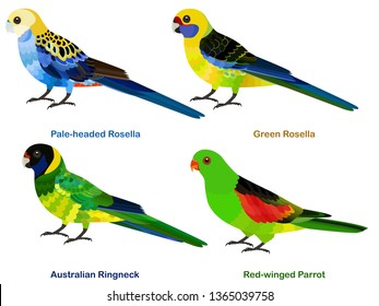 Cute Australia parrots, Rosella bird vector illustration set, Pale-headed Rosella, Green Rosella, Australian Ringneck, Red-winged Parrot, Colorful bird cartoon collection