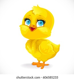 Cute baby chick isolated on a white background