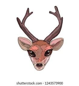 cute bambi head, vector illustration