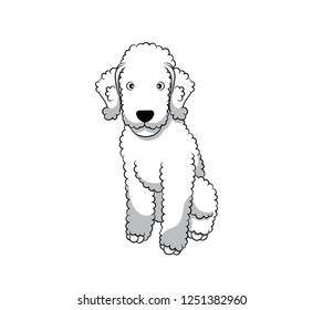 Bedlington Terrier Images, Stock Photos & Vectors   Shutterstock