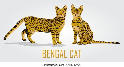 Cute bengal cat vector illustration