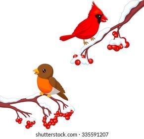 Cute bird robin and Cardinal on the cherry tree
