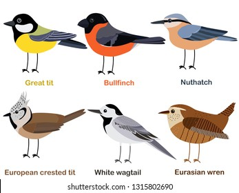 Cute bird vector illustration set, Great tit, Nuthatch, Bullfinch, White wagtail, Eurasian wren, European, crested tit, Colorful European bird cartoon collection