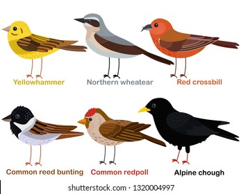 Cute bird vector illustration set, Yellowhammer, Wheatear, Red crossbill, Reed bunting, Redpoll, Alpine Chough, Colorful European bird cartoon collection