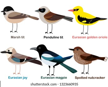 Cute bird vector illustration set, Nutcracker, Oriole, Marsh tit, Magpie, Penduline tit, Eurasian jay, Colorful European bird cartoon collection