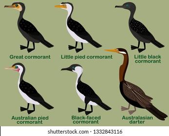 Cute bird vector illustration set, Great cormorant, Little pied, Little black, Australian pied, Black-faced, Australasian darter, Colorful bird cartoon collection