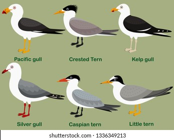 Cute bird vector illustration set, Pacific gull, Little tern, Silver gull, Kelp gull, Caspian tern, Crested Tern, Colorful seabird cartoon collection