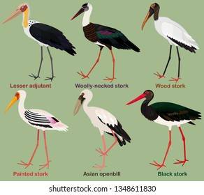 Cute bird vector illustration set, Painted stork, Black, Wood, Woolly-necked stork, Asian openbill, Lesser adjutant, Colorful bird cartoon collection