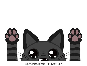 Cute black cat on a white background. Cat's paws