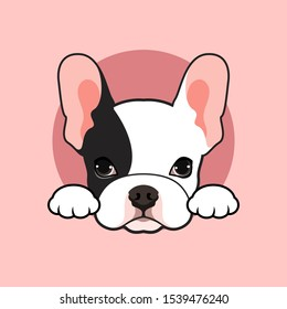 Cute black & white french bulldog puppy pose at the small open tunnel in pink background.