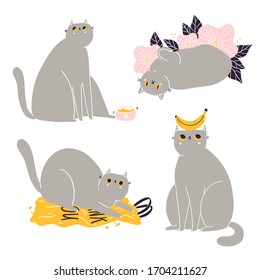 Cute british shorthair cat vector collection 3