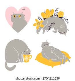 Cute british shorthair cat vector collection 6