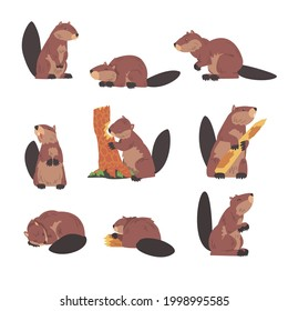 Cute Brown Beavers Set, Wild Rodent Animal in Different Poses Cartoon Vector Illustration