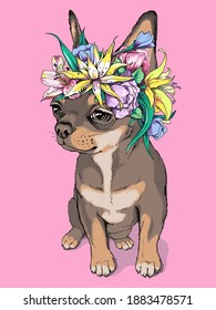 Cute brown chihuahua girl in a flower wreath. Portrait of a beautiful small dog. Spring composition for printing on any surface