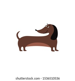 Cute brown dachshund dog with big black ears standing and smiling, cartoon pet animal with sausage shape body isolated on white background - flat vector illustration