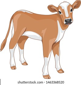 Cute calf isolated on white. Vector