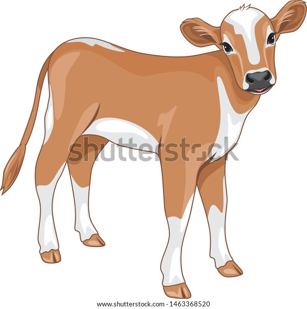 cute-calf-isolated-on-white-600w-1463368