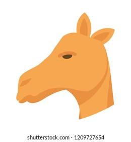 cute camel head desert animal