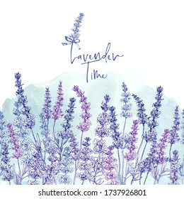 Cute card with of hand drawn sketch of Lavender flower and small bow isolated on white background. France retro pattern for romantic design concept. Text Lavender time Vintage vector illustration.