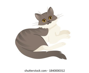 Cute cartoon animal design white and grey striped domestic cat adorable animal flat vector illustration