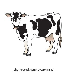 Cute cartoon cow illustration isolated on a white background in EPS10