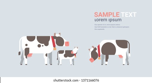 cute cartoon cows farm domestic animals husbandry grazing cattle concept flat gray background horizontal copy space