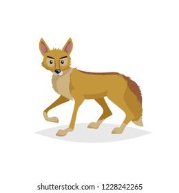 Cute cartoon coyote. Wild animal. Vector illustration for child books. Danger predator animal. Isolated on white background.