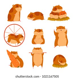 Cute cartoon hamster characters set, funny animal in different situations vector Illustrations