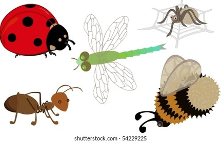 Cute cartoon insects: a ladybird, ant, dragonfly, bumblebee and a spider on his web
