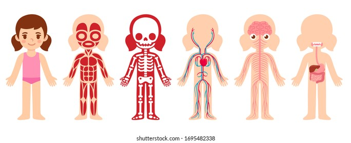 Human Body Systems Kids Images Stock Photos Vectors Shutterstock
