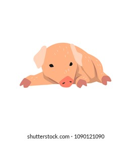 Cute cartoon little pig lying on the floor vector Illustration on a white background