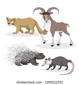 Cute cartoon North America and Europe animals set. Puma cougar, opossum big horn sheep urial and porcupine. Vector drawings for kids. Isolated on white background.