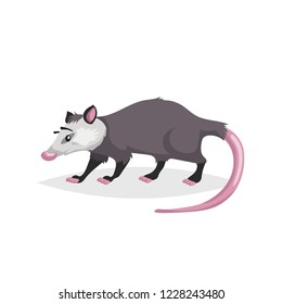 Opossum Drawing Images Stock Photos Vectors Shutterstock