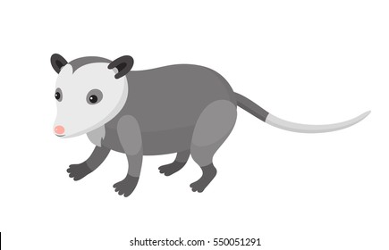 Cute cartoon opossum on isolated white background, vector illustration