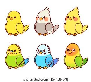 Cute cartoon pet birds illustration set. Cockatiel, parakeet, canary, lovebird. Small parrots isolated vector clip art.