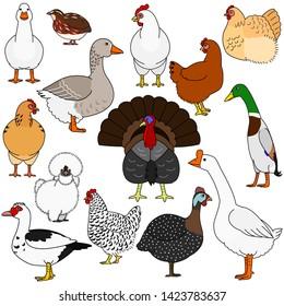 cute cartoon poultry doodle set
