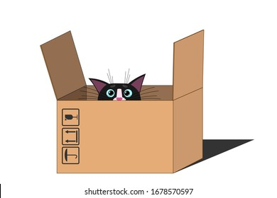 Cute cat muzzle, face, looks and peeks out frightened of the box. Cat with big blue eyes, long mustache and sharp ears. Blank template for design, decoration. White isolated background.