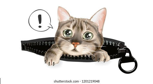 cute cat in zip pocket illustration