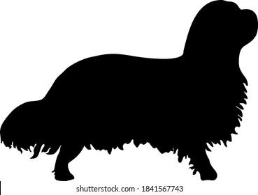 Cute Cavalier King Charles Spaniel Dog Silhouette
