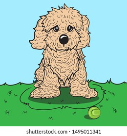 The cute Cavapoo puppy is sitting on green grass. Vector illustration.