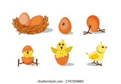 Cute chick hatching set. Chicken nest with egg, broken egg shell, baby bird. Vector illustration for farming, Easter, poultry concepts