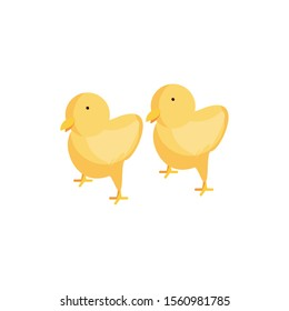 cute chickens on white background vector illustration design