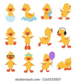 Cute chicks. Cartoon yellow ducks. Baby duck vector set. Bird animal, baby duck illustration