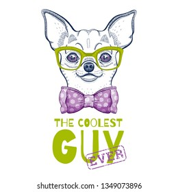 Cute chihuahua dog t-shirt print design. Cool animal vector, doodle hand drawn style for tee, child, baby funny apparel. Puppy character poster, hipster element. Fashion illustration isolated on white