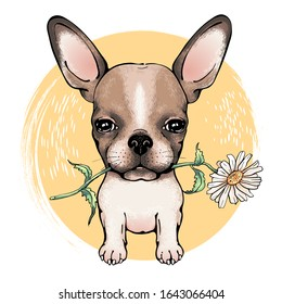 Cute chihuahua with flower. Drawn little dog